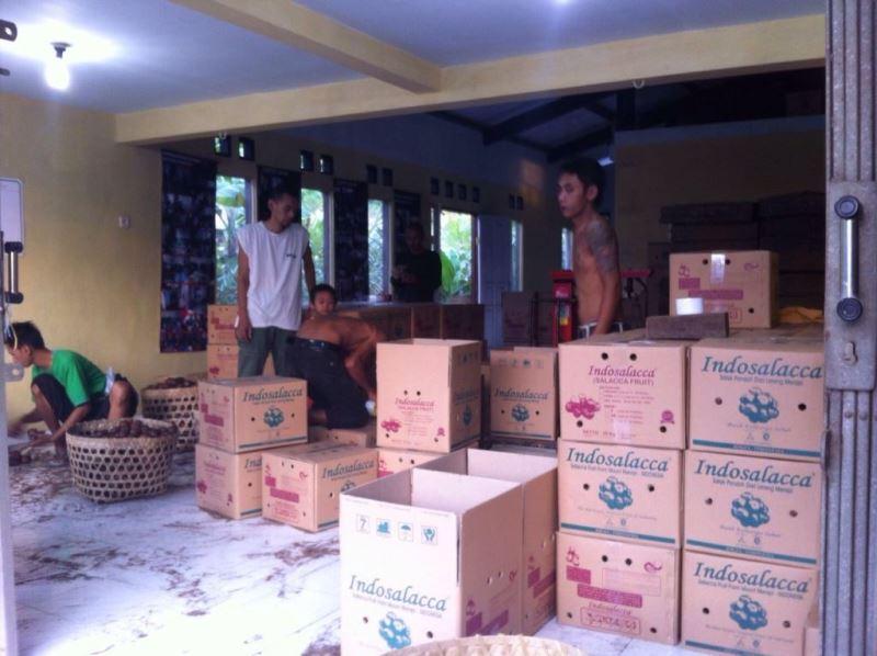 Foto: Salak pondoh siap diekspor ke China/Doc: pribadi